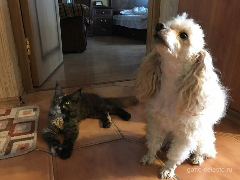 про котят