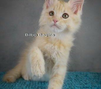 Gatto-Celesto-Bilbo-Baggins-7-foto-12-weeks [640x480]