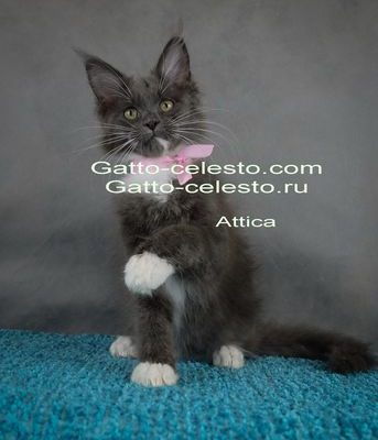 Gstto-Celesto-Attica-6-foto-14-weeks [640x480]